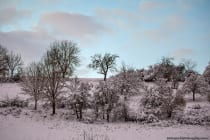 Bäume und Sträucher bedeckt vom Schnee. [EOS5D Mark4 | ISO1600 | f4,5 | 1/320s | 100mm]