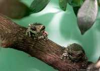 Kroete - Frosch