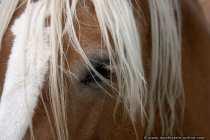 Auge von einem Pferd leicht verdeckt von der Mähne.