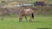 Pferd auf einer Weide - Horse on grass