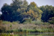 Vogelschutzgebiet Garstadt bei 97493 Bergrheinfeld