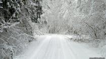 Weißer Schnee bedeckt Bäume und den forstwirtschaftlchen Waldweg. Winter-Wonderland Januar 2010 im Odenwald.