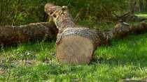 Wallpaper WQHD von einem gefallenen oder gefälltem Baum.