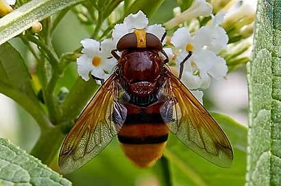 Makrofotografie; die Welt der Insekten.