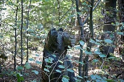 Bilder Waldkreaturen in Hardheim, Wolfsgrubenhütte