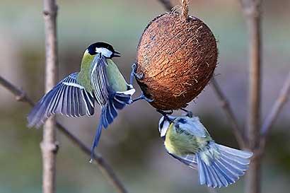Bilder Sperlingsvögel, Singvögel und Co