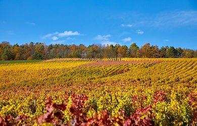 Herbstbilder und Herbstimpressionen