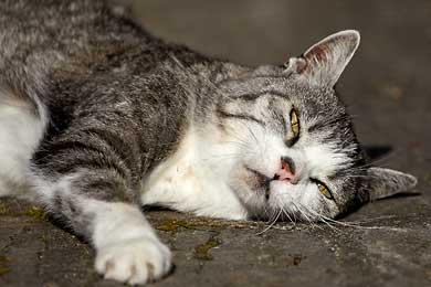 Fotoartikel über Katzen