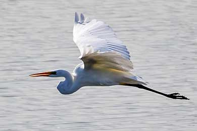 Vogelbilder von der Vogelinsel im Altmuehlsee bei Muhr